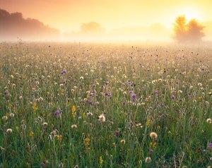 wildflower-3_2496937k